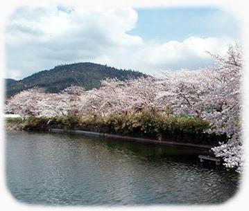 三輪山の桜